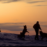 1993 Training Expedition. martin Hignell feeds dogs at camp on Great Slave Lake, NWT, Canada.