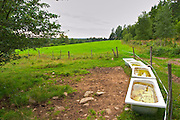 Old bath tubs filled with water for the cattle to drink from, in a field. Smaland region. Sweden, Europe.
