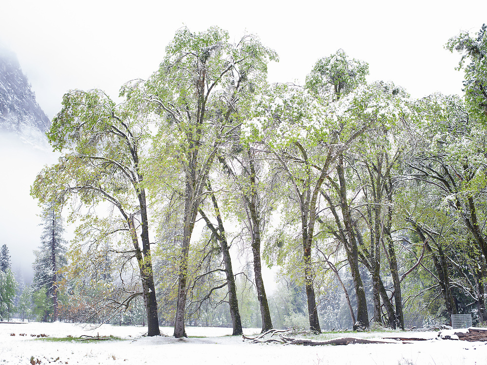 Yosemite, Ca - 2015: Yosemite Valley, 2015. Cooks Meadow and Spring snowstorm.