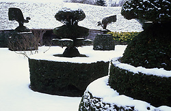 The topiary lawn at Great Dixter in winter. Taxus baccata - yew