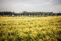 Peloton near Kranj during Stage 2 of 24th Tour of Slovenia 2017 / Tour de Slovenie from Ljubljana to Ljubljana (169,9 km) cycling race on June 16, 2017 in Slovenia. Photo by Vid Ponikvar / Sportida