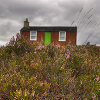 A windswept  carpet of heather in stormy weather. An old cottage is in the background, out of focus. Isle of Lewis, Outer Hebrides, Scotland.<br />
