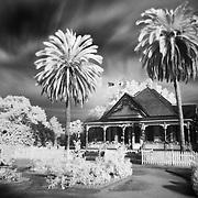 Doctor's Office And Palms - Fullerton Arboretum CA - Infrared Black & White