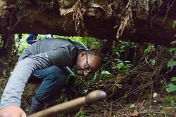 Ruben Gorilla Trecking Into Tight Spaces