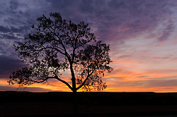 A lone cottonwood tree next to the Lower Fox Creek School basks in the sunrise light on a fall morning at the Tallgrass Prairie National Preserve. The 10,894-acre Tallgrass Prairie National Preserve is located in the Flint Hills of Kansas in Chase County near the towns of Strong City and Cottonwood Falls. Less than four percent of the original 140 million acres of tallgrass prairie remains in North America. Most of the remaining tallgrass prairie is in the Flint Hills in Kansas. Tallgrass Prairie National Preserve is the only unit of the National Park Service dedicated to the preservation of the tallgrass prairie ecosystem. The Tallgrass Prairie National Preserve is co-managed with The Nature Conservancy.