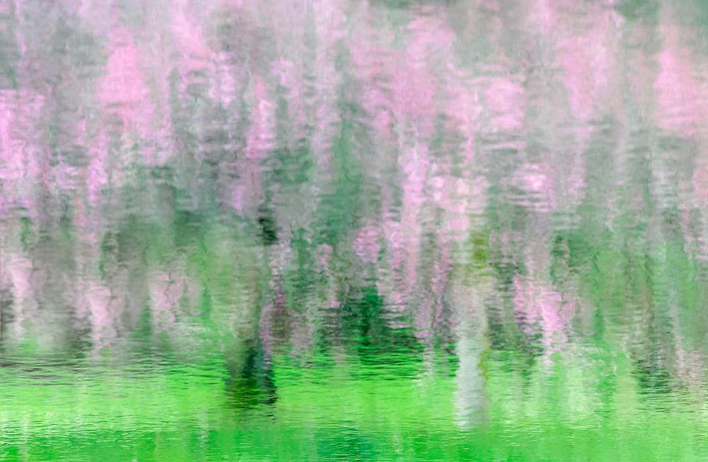 Pond reflection, spring, Washington Park Arboretum, Seattle, Washington, USA
