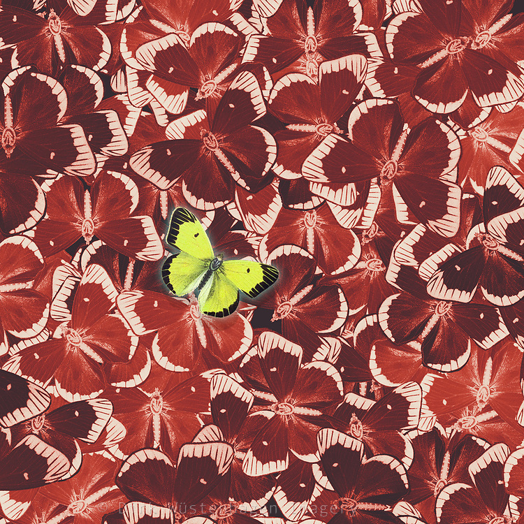 Pattern with red butterflies and one in yellow - digital illustration