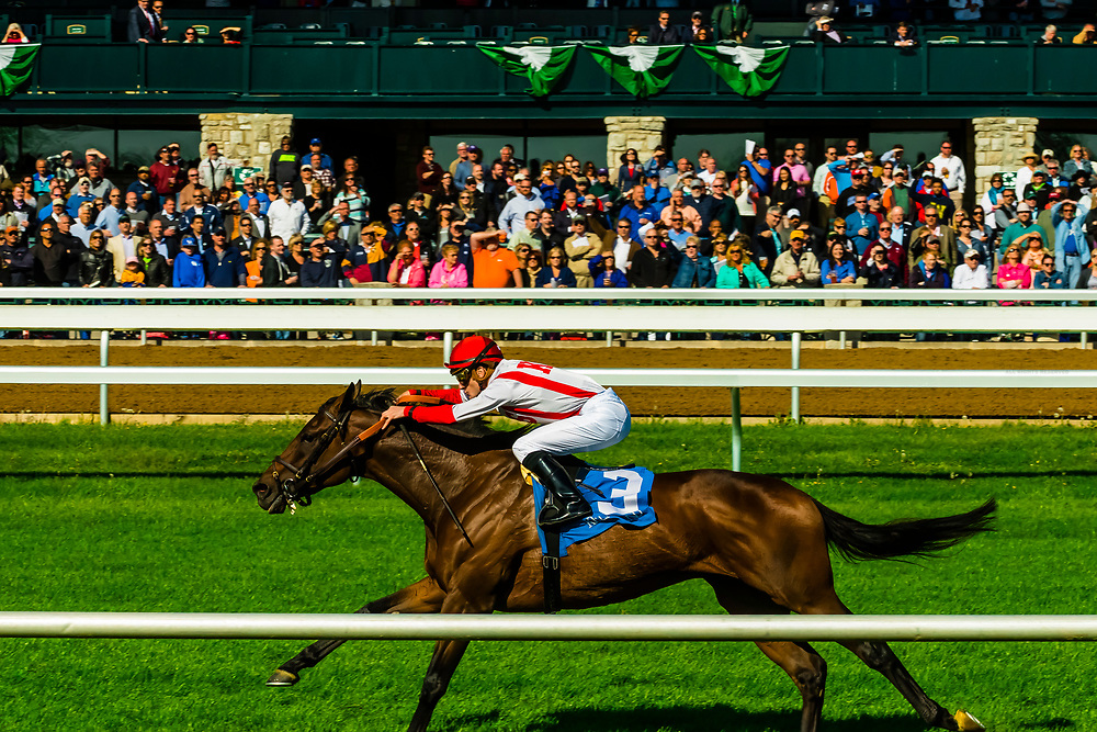 Jockey Julien Leparoux riding Innovation Economy, Horse racing on the turf track at Keeneland  Racecourse, Lexington, Kentucky USA.