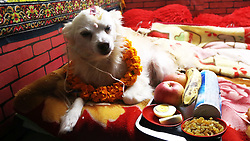 October 29, 2016 - Kathmandu, Nepal - A dog is worshiped on the second day of religious festival of Tihar in Kathmandu. Tihar is a five days second largest festival dedicated to various animals like dog, cow and crow etc. (Credit Image: © Archana Shrestha/Pacific Press via ZUMA Wire)