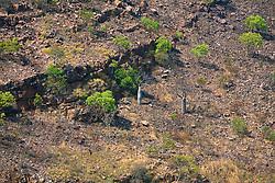 A burnt hillside in Leadline Creek.