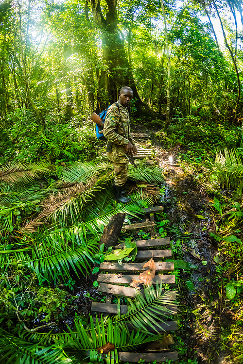 Park rangers, leading hike  to find chimpanzees, Kibale Forest National Park, home of the largest number of primates of any national park in the world, Uganda.
