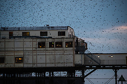 © London News Pictures. 31/10/2015. Aberystwyth, UK,. A flock of starlings flies around Aberystwyth pier at dusk.<br /> Each evening between October and March tens of thousands of the birds fly in huge murmurations in the sky above the town before settling to roost for the night on the cast iron legs of the Victorian seaside pier.  <br /> Aberystwyth is one of only a handful of urban starling roosts in the UK. Photo credit: Keith Morris/LNP