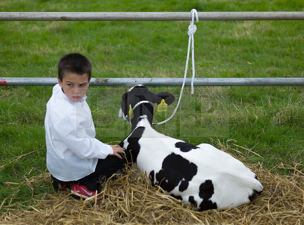© Licensed to London News Pictures. <br /> 13/08/2014. <br /> <br /> Danby, North Yorkshire, United Kingdom<br /> <br /> A young boy sits next to a young calf during the Danby Agricultural Show in North Yorkshire. <br /> <br /> This year is the 154th show which was founded in 1848. It is the oldest agricultural show in the area and offers sheep dog trials, judging of a variety of different animals such as cattle, sheep, ferrets, horses and rabbits along with different classes of horticulture and dairy. <br /> <br /> Photo credit : Ian Forsyth/LNP