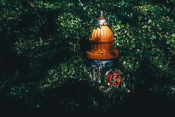 THEMENBILD - ein verwucherter Feuerhydrant, aufgenommen am 04.01.2019, New Orleans, Vereinigte Staaten von Amerika // a ravaged fire hydrant, New Orleans, United States of America on 2019/01/04. EXPA Pictures © 2019, PhotoCredit: EXPA/ Florian Schroetter