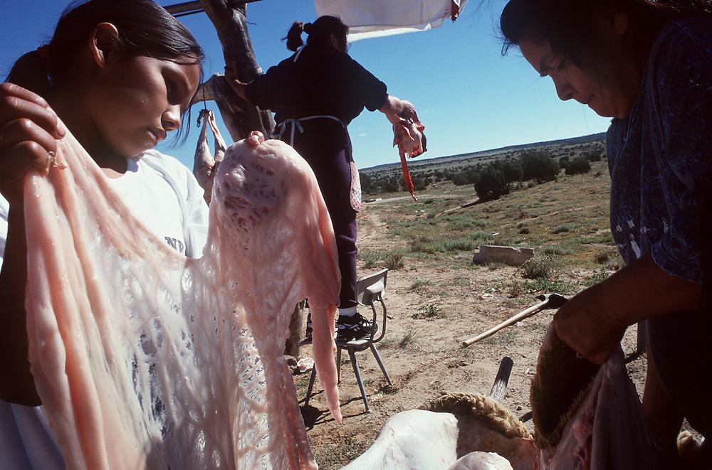 Shorty family butchering a sheep, Navajo Reservation
