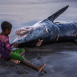 """A boy is watching the teeth of a shark up close. <br /> <br /> Hunt and Landing. Usually the fishermen/ whalers leave in the morning around 6 am, and return in the late afternoon to land their catch which they spear with hands-on bamboo harpoons (manta rays, dolphins, sharks, turtles) smaller fish will be caught by nets. Those who catch manta rays, sharks or dolphins only share the catch with the boat crew, whereas the whales will be shared among the community followed by strict rules. It's great teamwork, Everyone congregates to help pushing the """"Johnsons"""" (engine boats) back into the shelters, even the youngest children.<br /> <br /> The clans inhabiting the tiny village of Lamalera, on the sunbaked Lembata island (Nusa Tenggara Timur Province) have been spearing and landing sperm whales by hand for at least six centuries. Traditional whaling is incredibly difficult and therefore an unpredictable path of day to day survival. But despite the ongoing economic and religous transition, the society of this tiny village has not lost a single bit of their pride nor their identity. And because the Lamalerans have been doing this since the dawn of time, they carry on, even with a permission from the Indonesian government – as long as they hunt for their own consumption and not for commercial sale. Most of the fishing tradition dates back way before the transcontinental Republic of Indonesia even existed. Historical tales indicate that the Lamalerans originated from Sulawesi, where they waded out with nets for mackerel or other small fish; more experienced, they pushed off in boats and and captured bigger prey; and at last, launching a small fleet of sailing boats on the Banda Sea, explored this watery world until they must have reached what is now Lamalera. The first European record of their existence is an anonymous Portuguese document from 1643."""