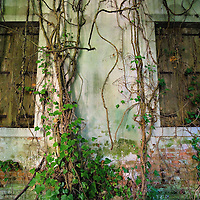 VENICE, ITALY - AUGUST 27:  Two windows are covered with ivy at the abandoned Hospital of Poveglia on August 27, 2011 in Venice, Italy. The island of Poveglia, with its ruined hospital and plague burial grounds, is said to be the most haunted location in the world. Though it is a multi-million dollar piece of real estate it lies deserted and off limits to the public. Its dark, forbidding shores are only minutes away from the glamour of the Venice Film Festival on the Lido.  ...To discuss licensing our 4000 word photo documentary of the island, email robin@robinsaikia.com. ..British author Robin Saikia visited the site with Italian photographer Marco Secchi. Marco captured the sinister atmosphere of the island. Robin describes the terrifying apparitions and the stories behind them.