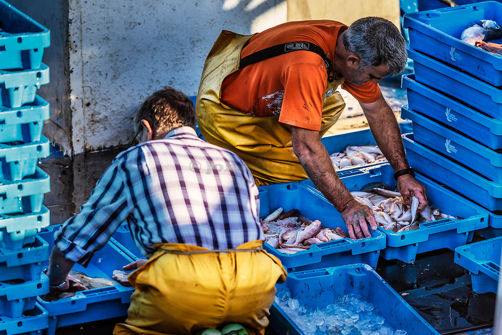 Fisherman sort their catch for market, Palamos, Spain