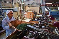 Japon, île de Honshu, région de Shizuoka, usine de thé de Mr Mizuno de Maruichi Mizuno Seicha // Japan, Honshu, Shizuoka, tea factory of Mr Mizuno de Maruichi Mizuno Seicha