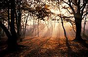 Early Morning sun in woodland, Streatham Common, London, UK, autumn, sunlight