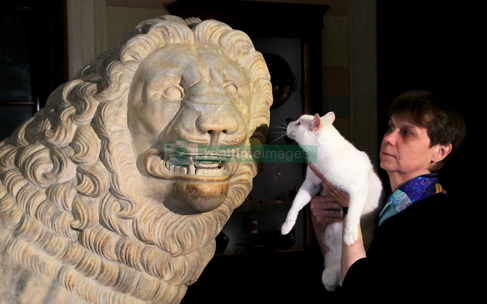 June 22, 2018 - Saint Petersburg, Russia - June 22, 2018. - Russia, Saint Petersburg. - State Hermitage Museum deaf cat Achilles, the 2018 FIFA World Cup animal oracle, predicts the result of the 2018 FIFA World Cup First Stage Group E match between Brazil and Costa Rica. (Credit Image: © Russian Look via ZUMA Wire)