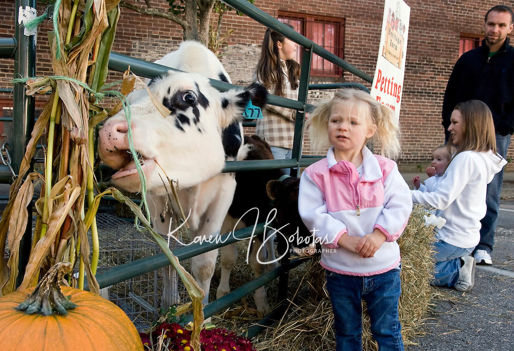 2 1/2 year old Lily Hanson isn't convinced that corn stalks are a good lunch choice as she enjoys the petting zoo animals provided by Heritage Farm's during the Laconia Main Street's Community Street Fair Saturday.  (Karen Bobotas/for the Laconia Daily Sun)