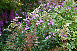 Phlox and astilbe going to seed in August at Glebe Cottage