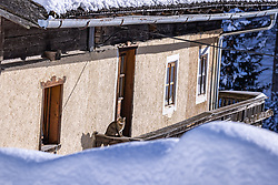 THEMENBILD - Hauskatze sitzt auf Balkon eines Bauernhauses. Kals, Österreich am Dienstag, 5. Januar 2021. Nach den starken Schneefällen welche vom 5. bis 8. Dezember 2020 sowie vom 1. bis 3 Jänner 2021 über Osttirol und Oberkärnten nieder gingen, sorgten für grosse Neuschneemengen in der Region // Domestic cat sitting on balcony of a farmhouse. Kals, Austria on Tuesday, January 5, 2021. After the heavy snowfalls which fell over East Tyrol and Upper Carinthia from December 5 to 8, 2020, and from January 1 to 3, 2021, caused large amounts of new snow in the region. EXPA Pictures © 2021, PhotoCredit: EXPA/ Johann Groder