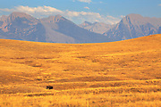 Mission Range rises up as a backdrop on the National Bison Range, Montana.