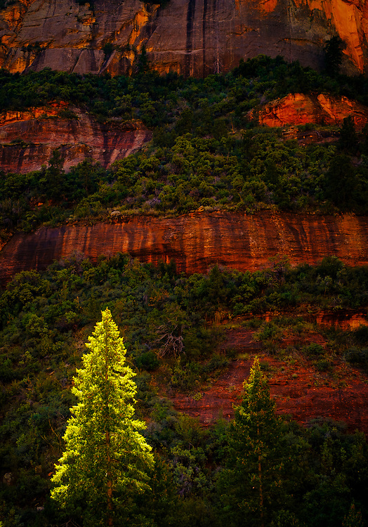 Backlit tree in Boynton Canyon, AZ