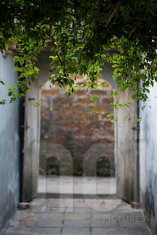 Creepers overgrown on a pergola and fall back in the void. Out of focus, an old entrance gate appears in the background. Vietnam, Asia.