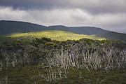 Hills and bush along The Southern Circuit, Stewart Island / Rakiura, New Zealand Ⓒ Davis Ulands | davisulands.com