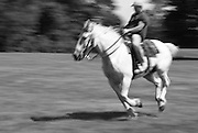 Galloping on Horse Black and White Photo Art