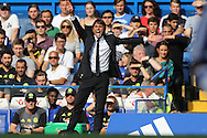 Antonio Conte, the Chelsea manager waves his arms about and shouts at his players from the touchline. Premier league match, Chelsea v Burnley at Stamford Bridge in London on Saturday 27th August 2016.<br /> pic by John Patrick Fletcher, Andrew Orchard sports photography.
