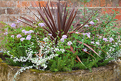 Cordyline, verbena and rosemary in a stone trough at Hidcote Manor Garden