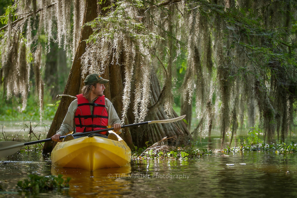 Cory Werk of Bayou Teche Experience kayak outfitters guides kayakers through cypress tress in Lake Martin in St. Martin Parish, Louisiana.