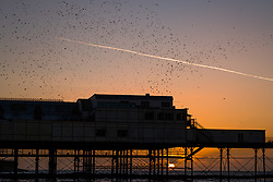 © Licensed to London News Pictures. 29/10/2017. Aberystwyth, Wales, UK. On a glorious clear and cold evening, thousands of tiny starlings flying and swoop  in  'murmurations' of intricate patterns in the sky above Aberystwyth before roosting for the night underneath the town's seaside pier. After spending the summer months in Scandinavia, the flocks of migratory starlings have returned to their winter feeding ground and roosts in the UK. Photo credit: Keith Morris/LNP