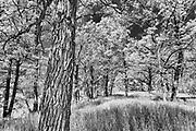 Seine River Forest.<br /> Winnipeg<br /> Manitoba<br /> Canada