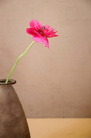 Extreme simple composition of a pink flower in a natural earth toned setting.