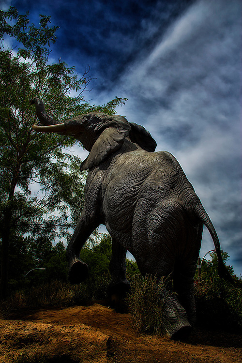 A Shadowed Moody Shot of the Elephant Statue in front of the Saint Louis Zoo. This sculpture is named Reaching Elephant by  Kent Ullberg