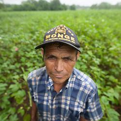 Coffee, cotton, sesame, peanuts, Fairtrade, Nicaragua