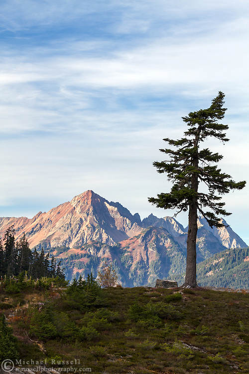 A lone tree stands in front of Mount Larrabee in the North Cascades of Washington State, USA. Photographed from the Fire and Ice Trail in the Heather Meadows area of the Mount Baker-Snoqualmie National Forest.