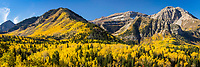 Golden yellow aspen trees cover the hills of Mt. Timpanogos in American Fork Canyon on a sunny Fall day.