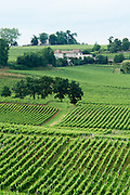 vineyard saint emilion bordeaux france