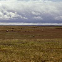 South America, Argentina, Patagonia. Windswept Patagonian plains.