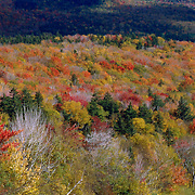 Waterville Valley Wilderness area, part of the White Mountain National Forest