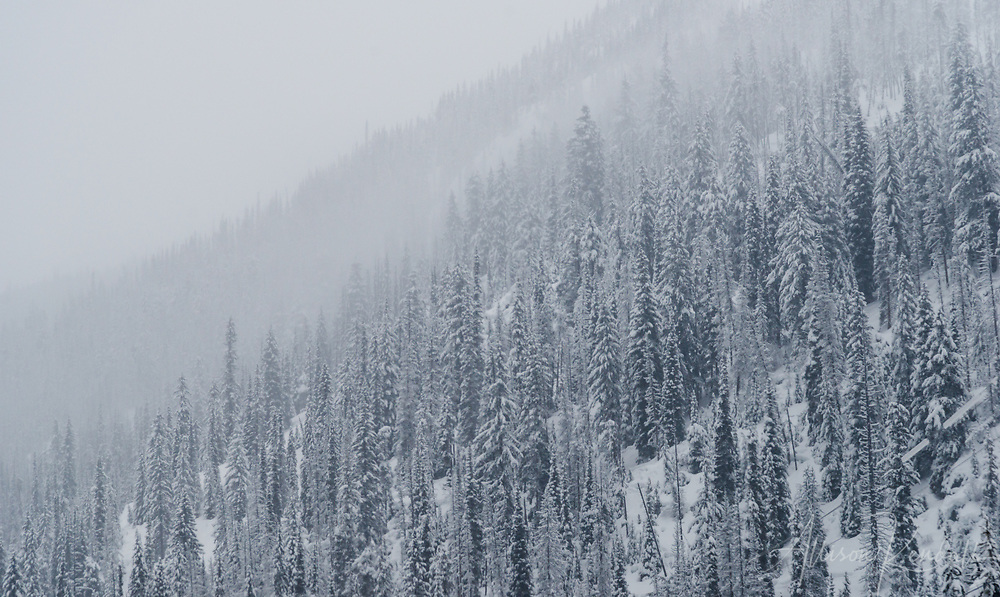 Misty winter scenery in the Southern interior British Columbia forests of Canada