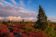 Interesting cloud formations sweep across the Allegheny Front over the autumnal reds of and flagged pine of Dolly Sods in West Virginia lit by the morning sun.