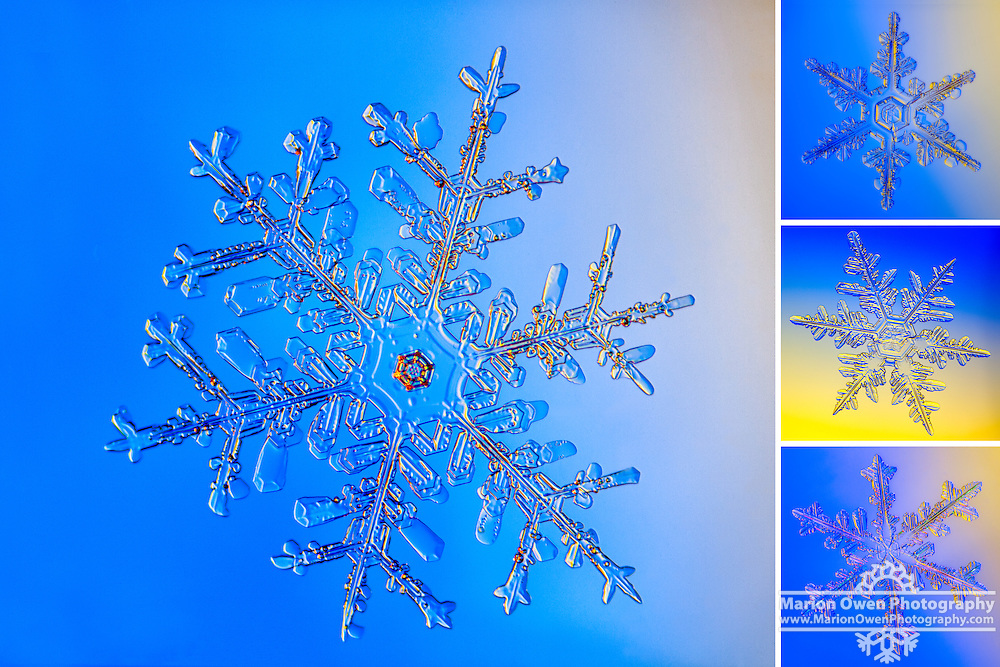 Collection of snowflakes photographed through microscope