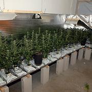 NLD/Weesp/20060209 - Hennepkwekerij gevonden door politie Nijverheidslaan Weep, planten, lampen, kweek